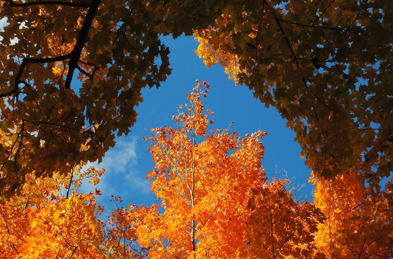 late autumn 03