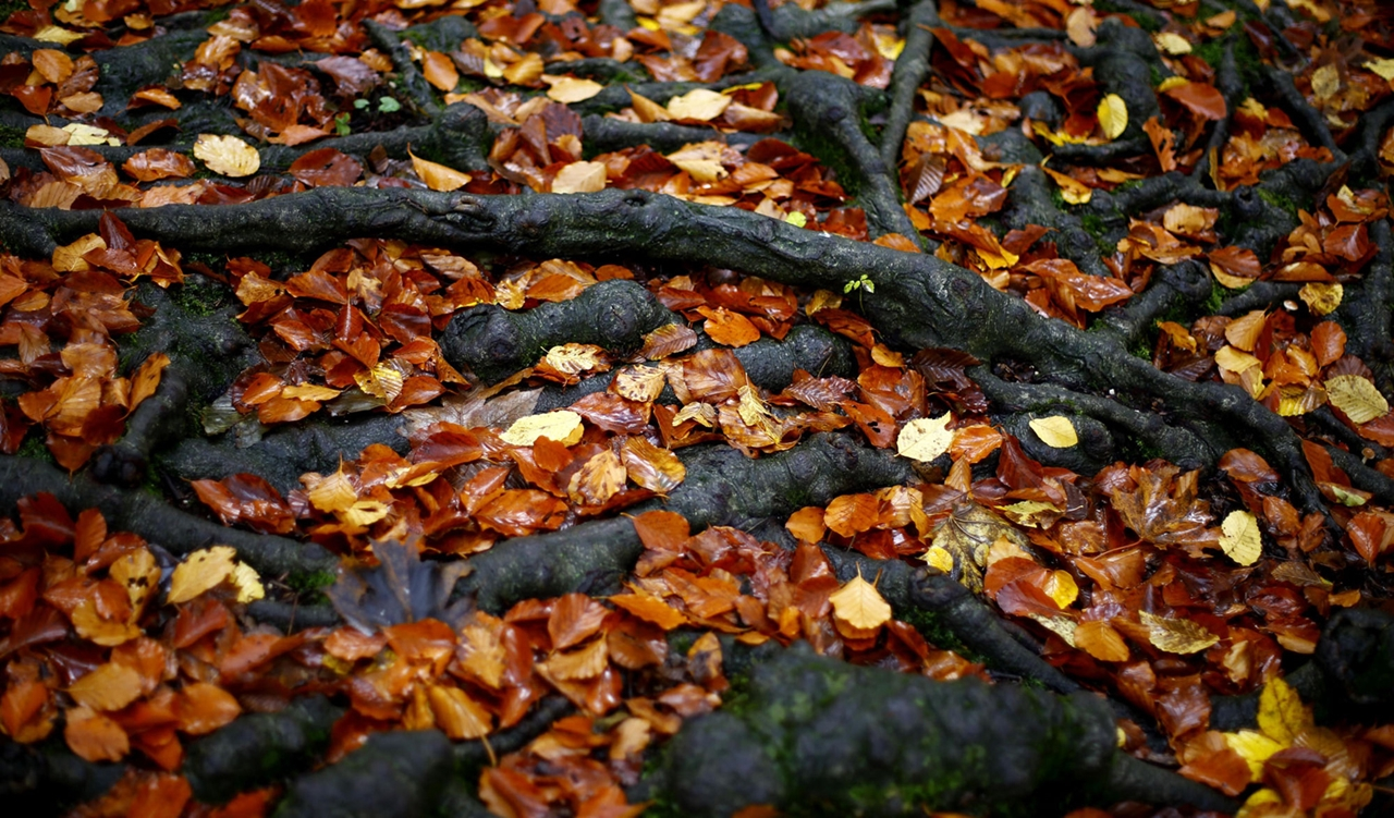 late autumn 07