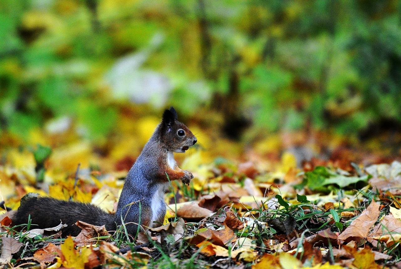 late autumn 08