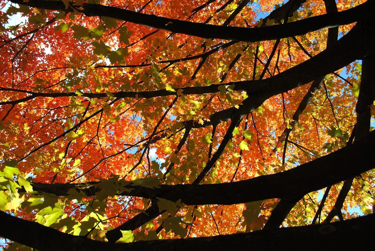 late autumn 11