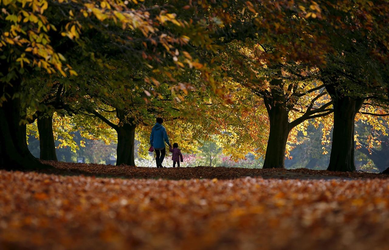 late autumn 13