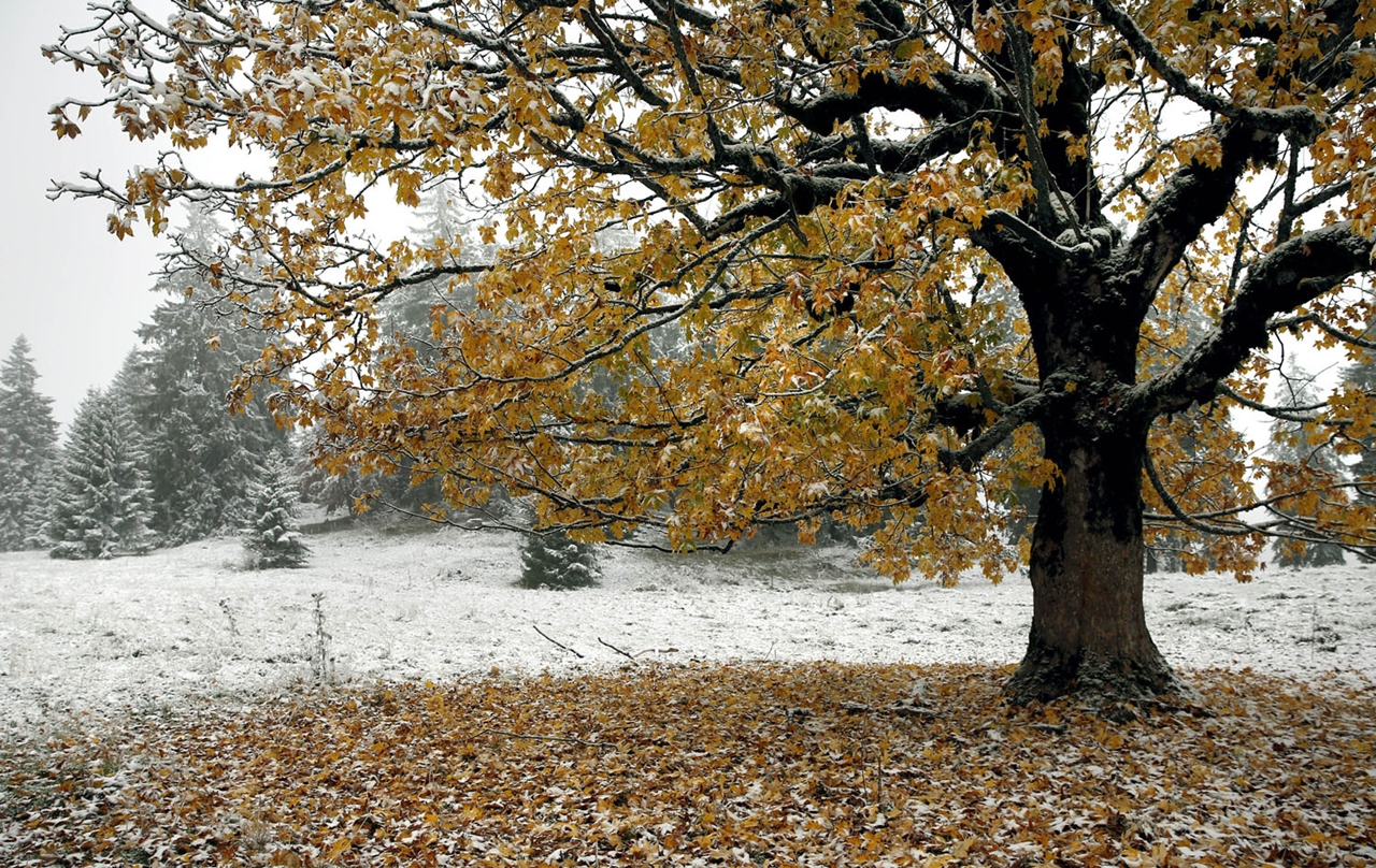 late autumn 19