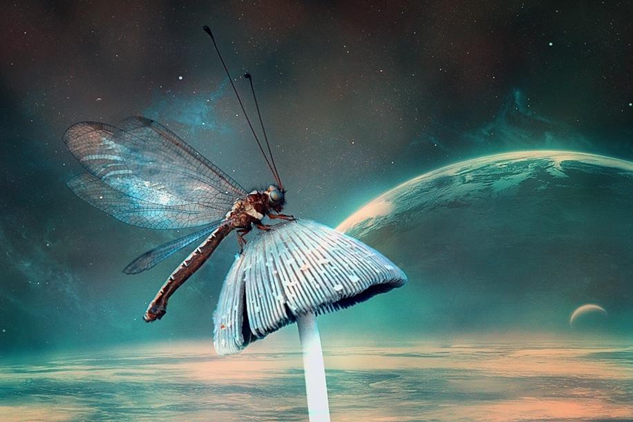 Сказочный мир насекомых в фотографиях Syuwandi Sien