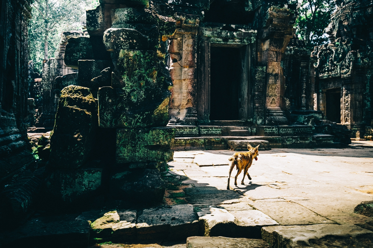 the-temples-of-angkor 18