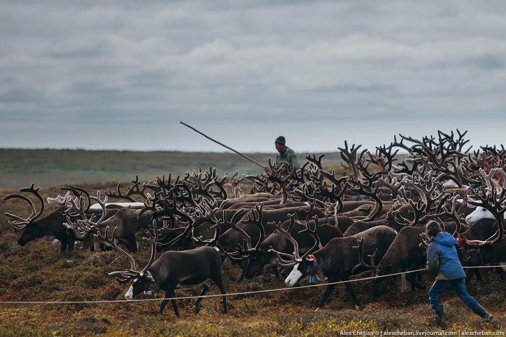 """В Якутии """"бдительные"""" пограничники задержали оленеводов в тундре за нарушение паспортного режима"""