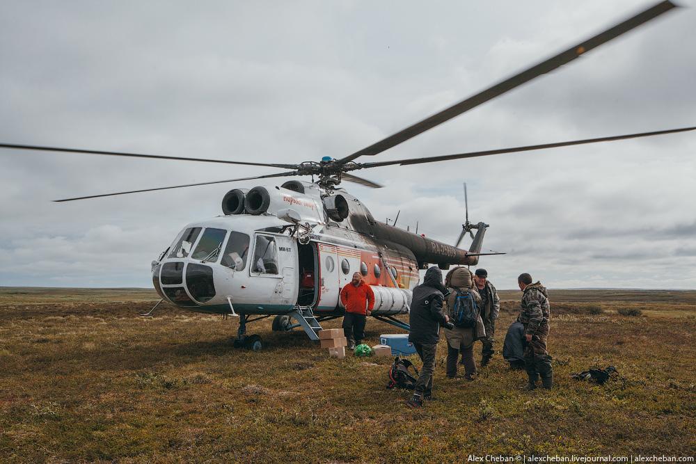 tundra_05