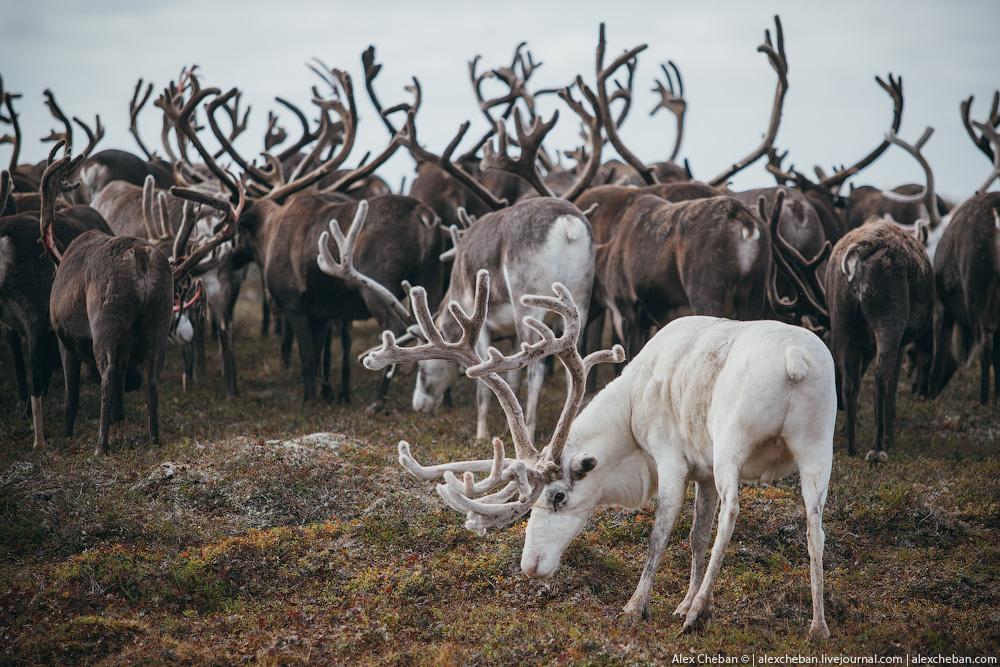 tundra_35