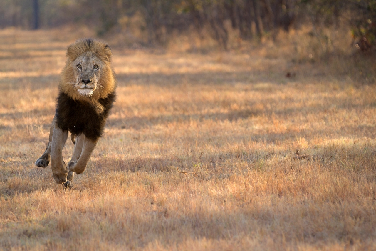 2015 Africa Geographic Photographer of the Year Award 02