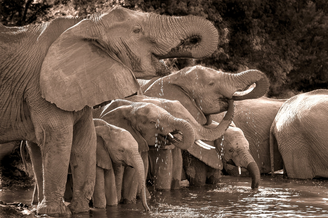 2015 Africa Geographic Photographer of the Year Award 03