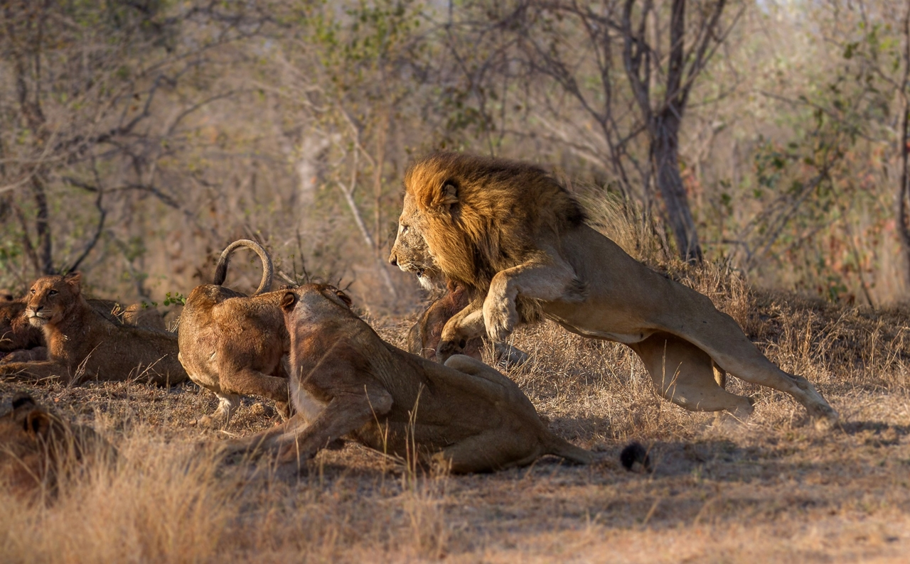 2015 Africa Geographic Photographer of the Year Award 06