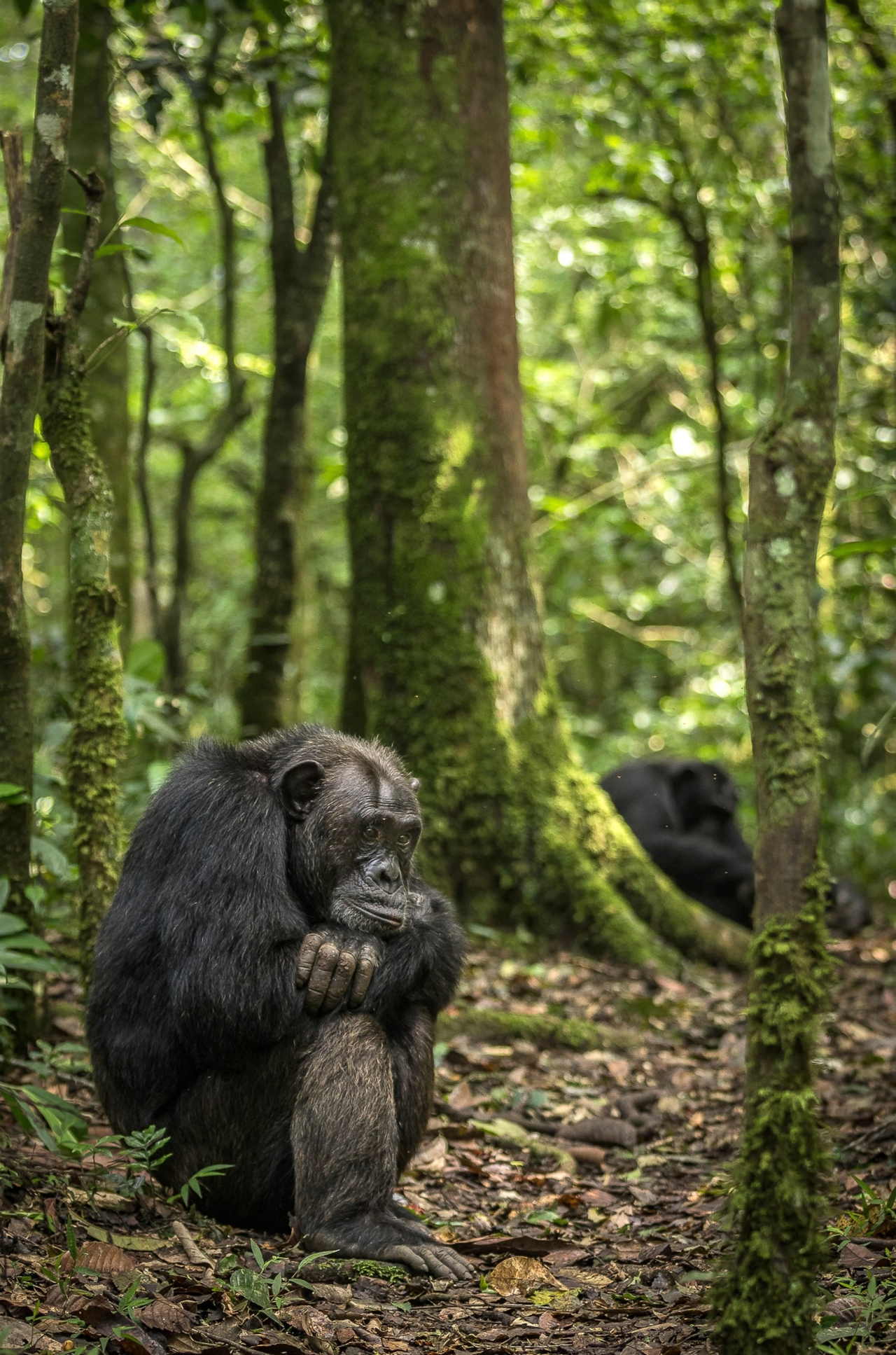 2015 Africa Geographic Photographer of the Year Award 07