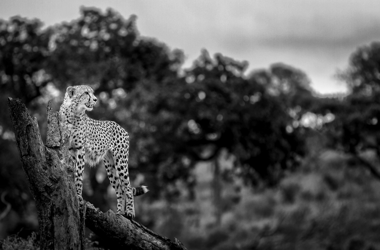 2015 Africa Geographic Photographer of the Year Award 11