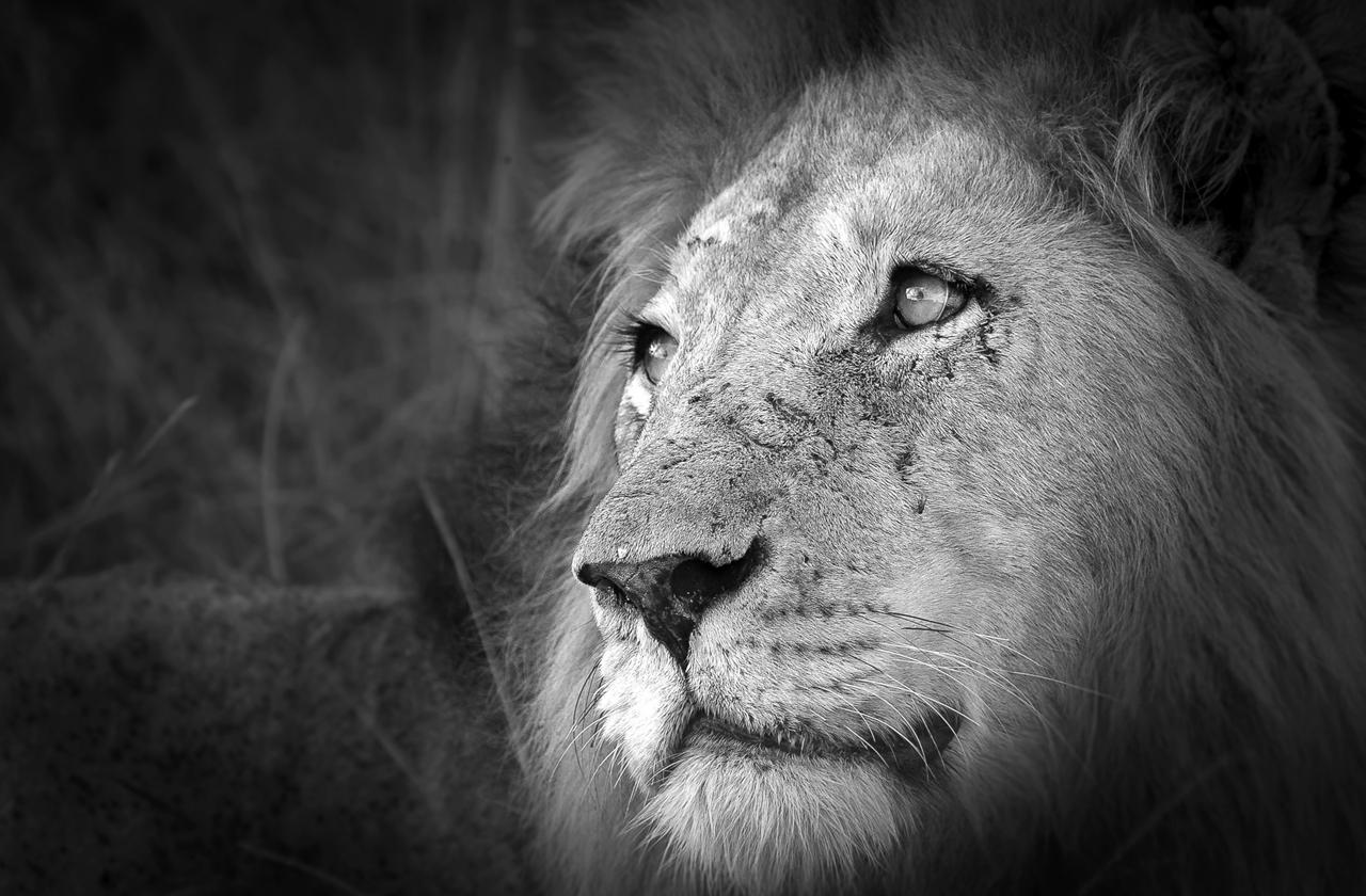 Лучший фотограф Африки 2015 года