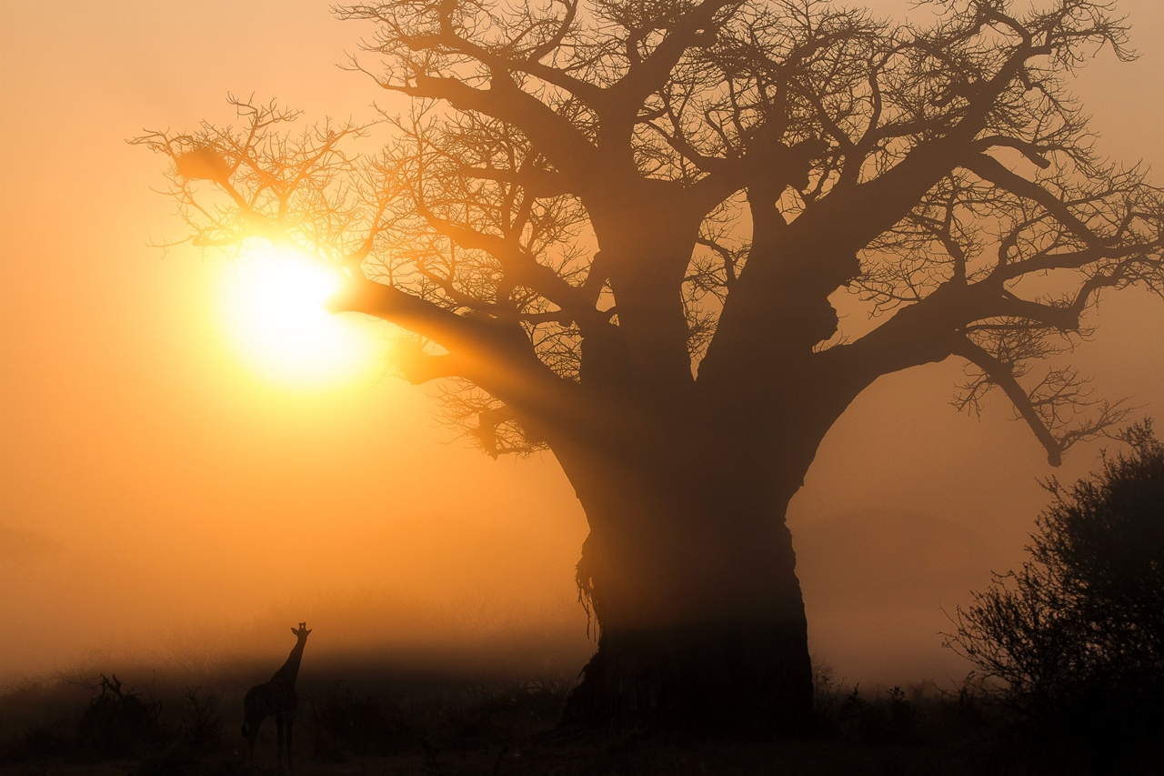 2015 Africa Geographic Photographer of the Year Award 15