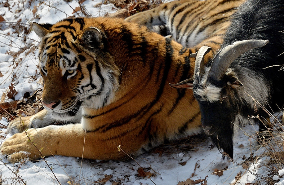 Animals in photos 16