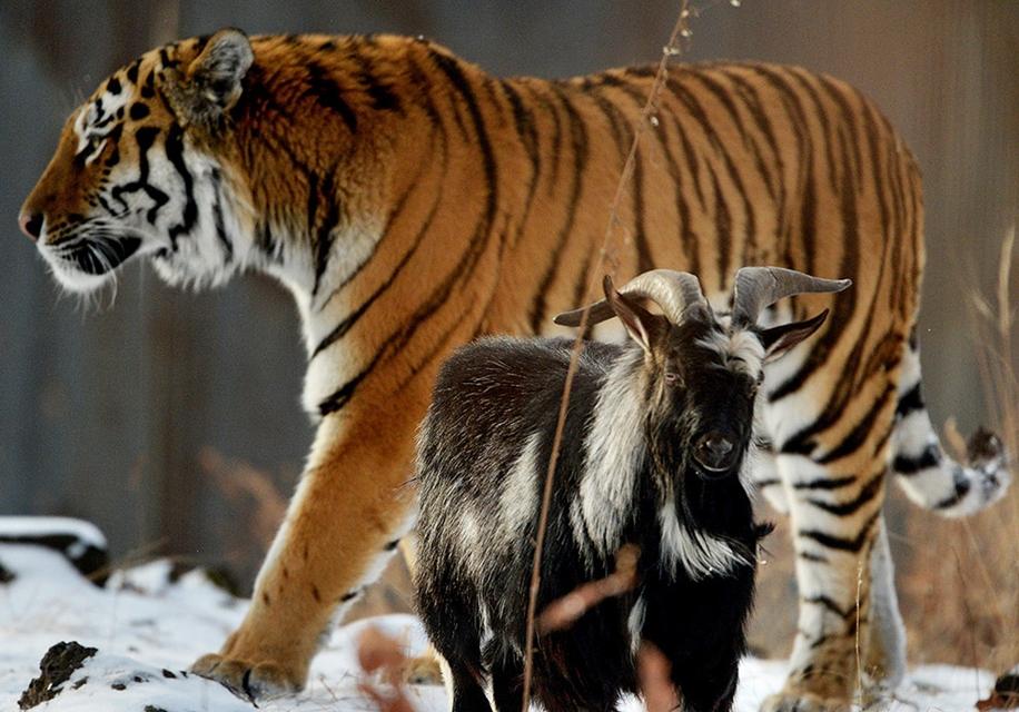 Animals in photos 17