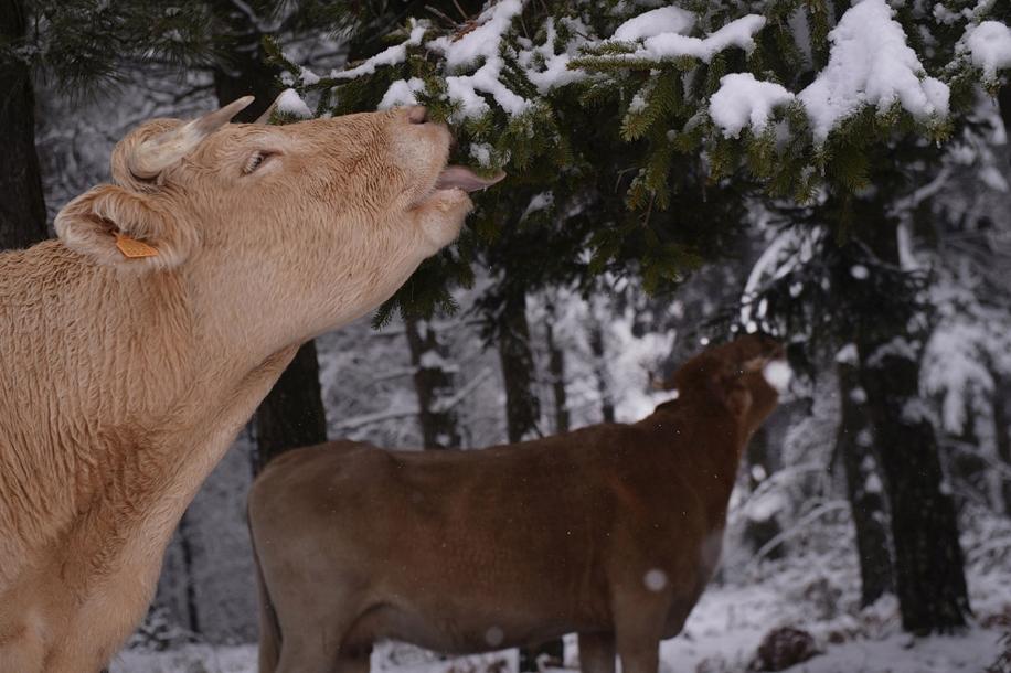Animals in photos 21
