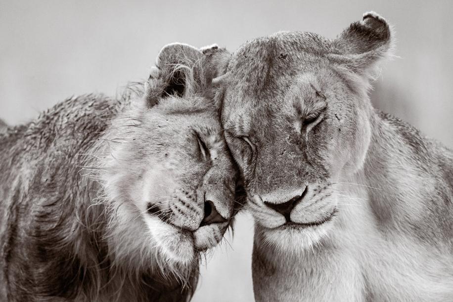 Animals in photos 23
