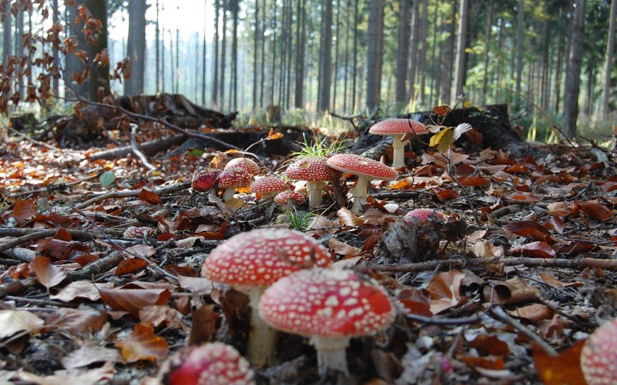 Beautiful autumn photos 02
