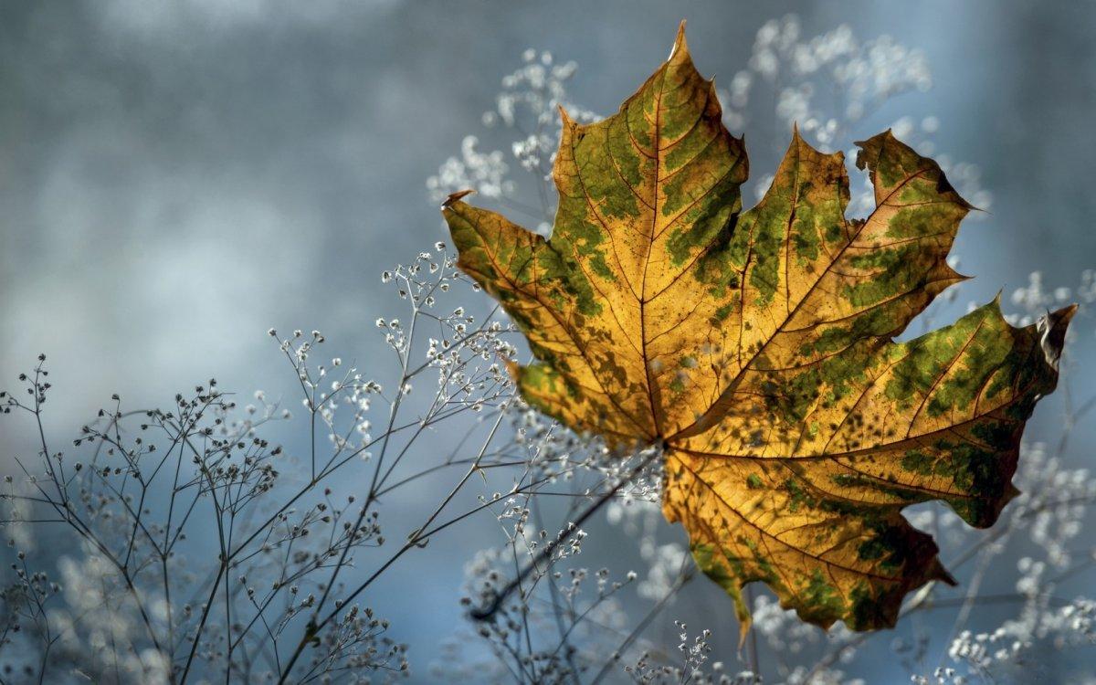 Beautiful autumn photos 03