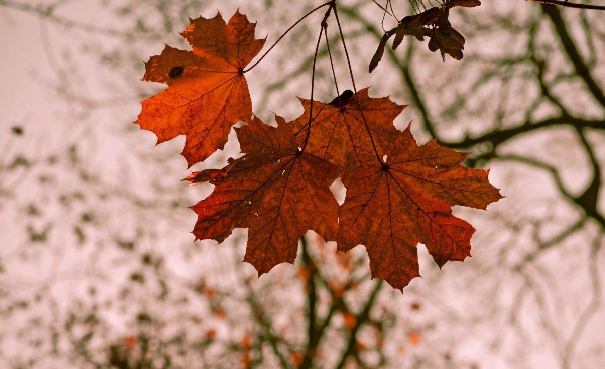 Beautiful autumn photos 08