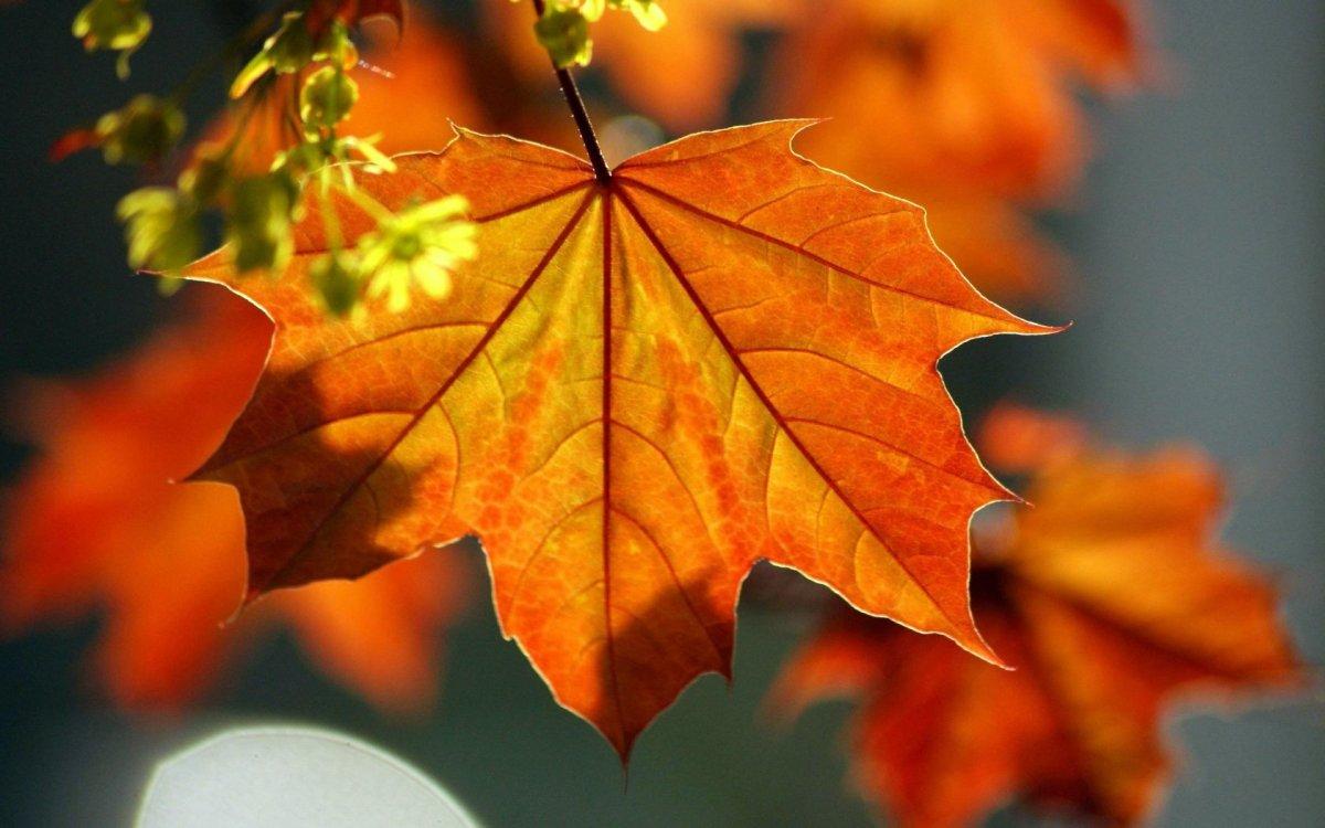 Beautiful autumn photos 10