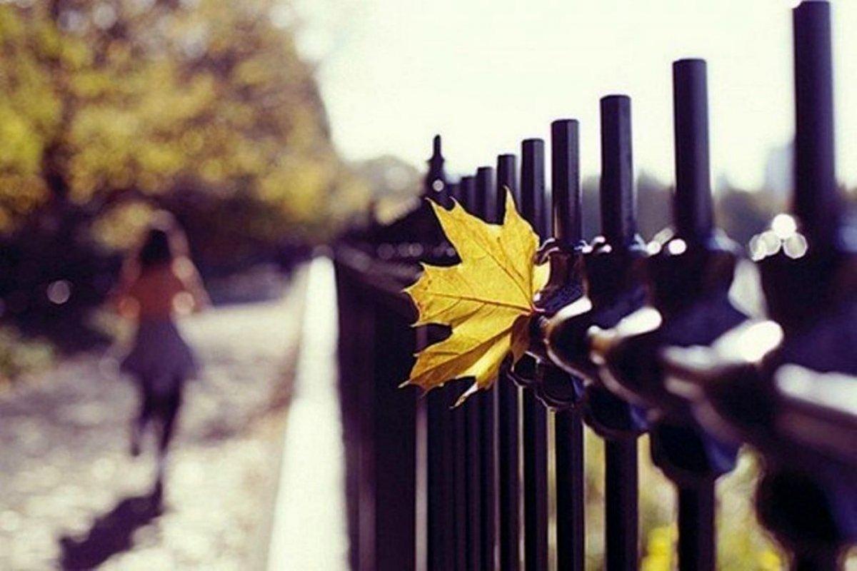 Beautiful autumn photos 12