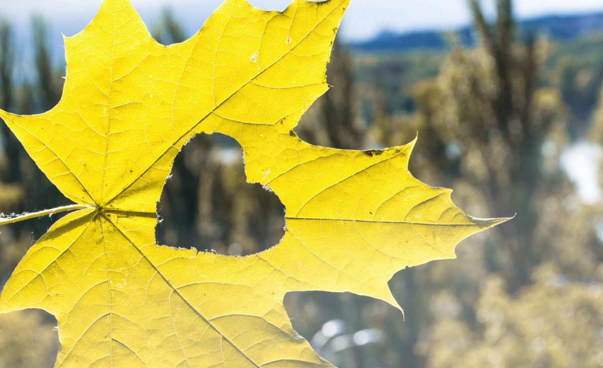 Beautiful autumn photos 14