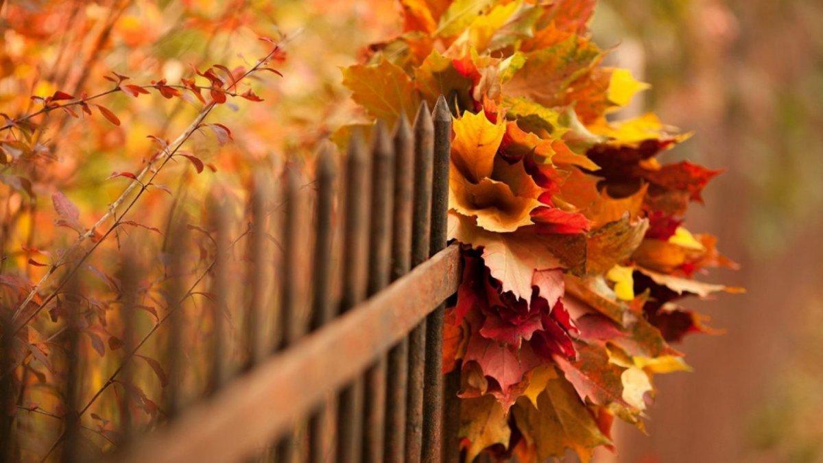 Beautiful autumn photos 18