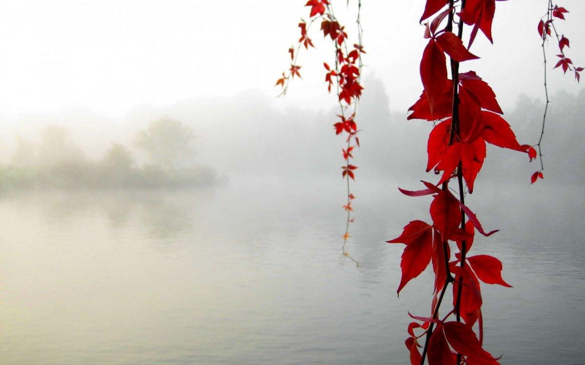 Beautiful autumn photos 22