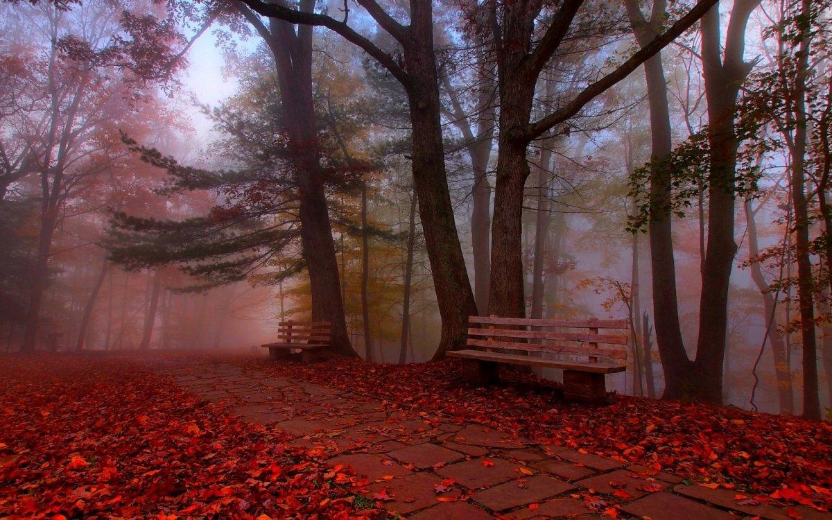 Beautiful autumn photos 25