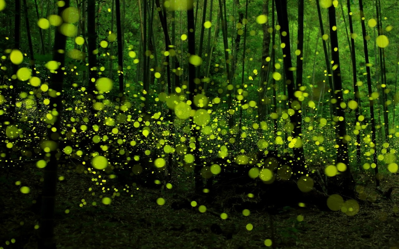 Forest with a mysterious and attractive aura 10