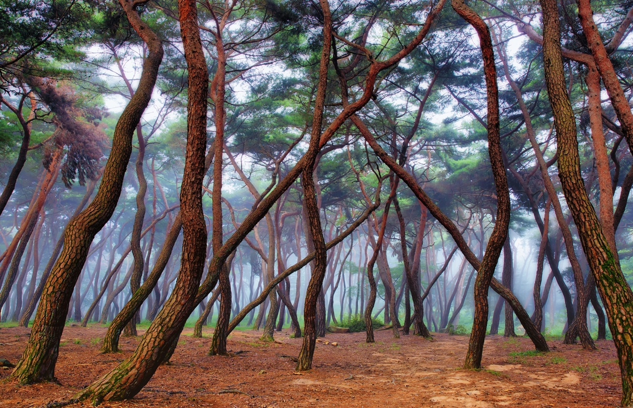Forest with a mysterious and attractive aura 11