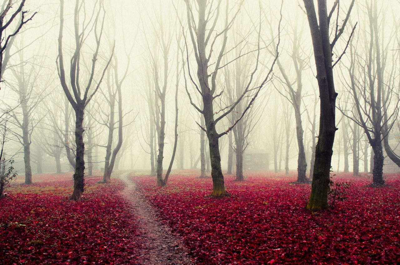 Forest with a mysterious and attractive aura 14
