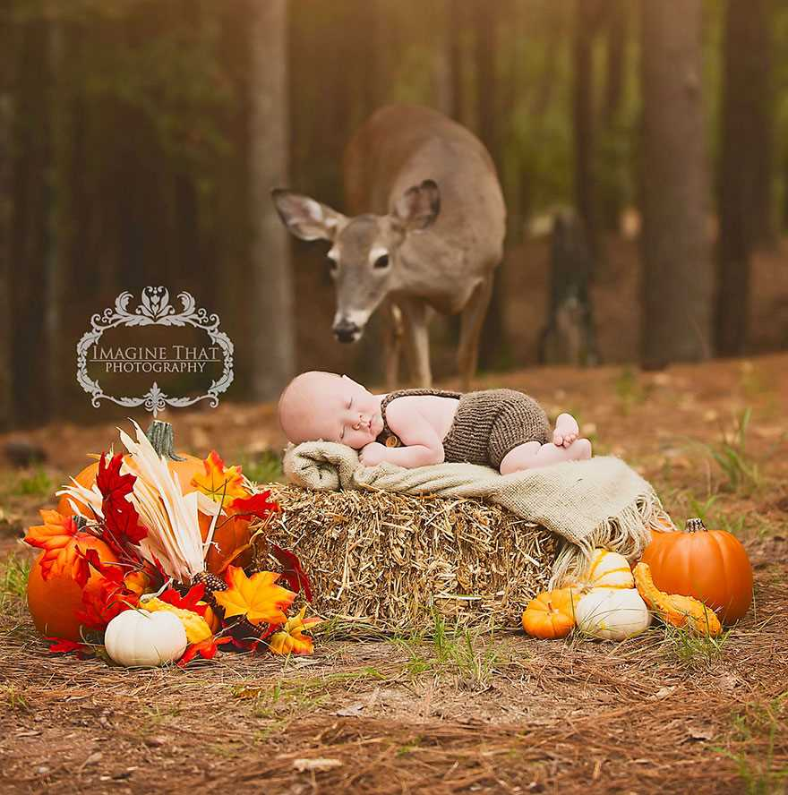 Magical photo shoot baby deer 02