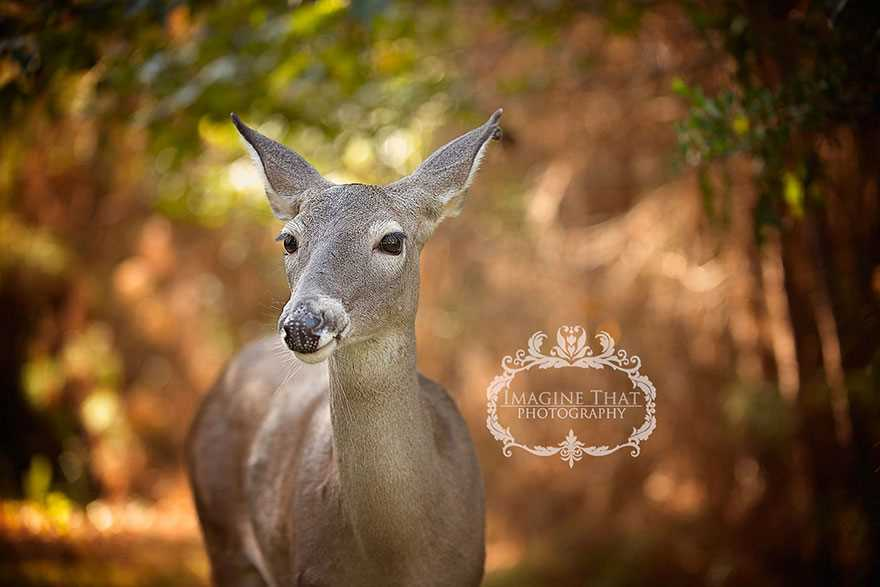 Magical photo shoot baby deer 04