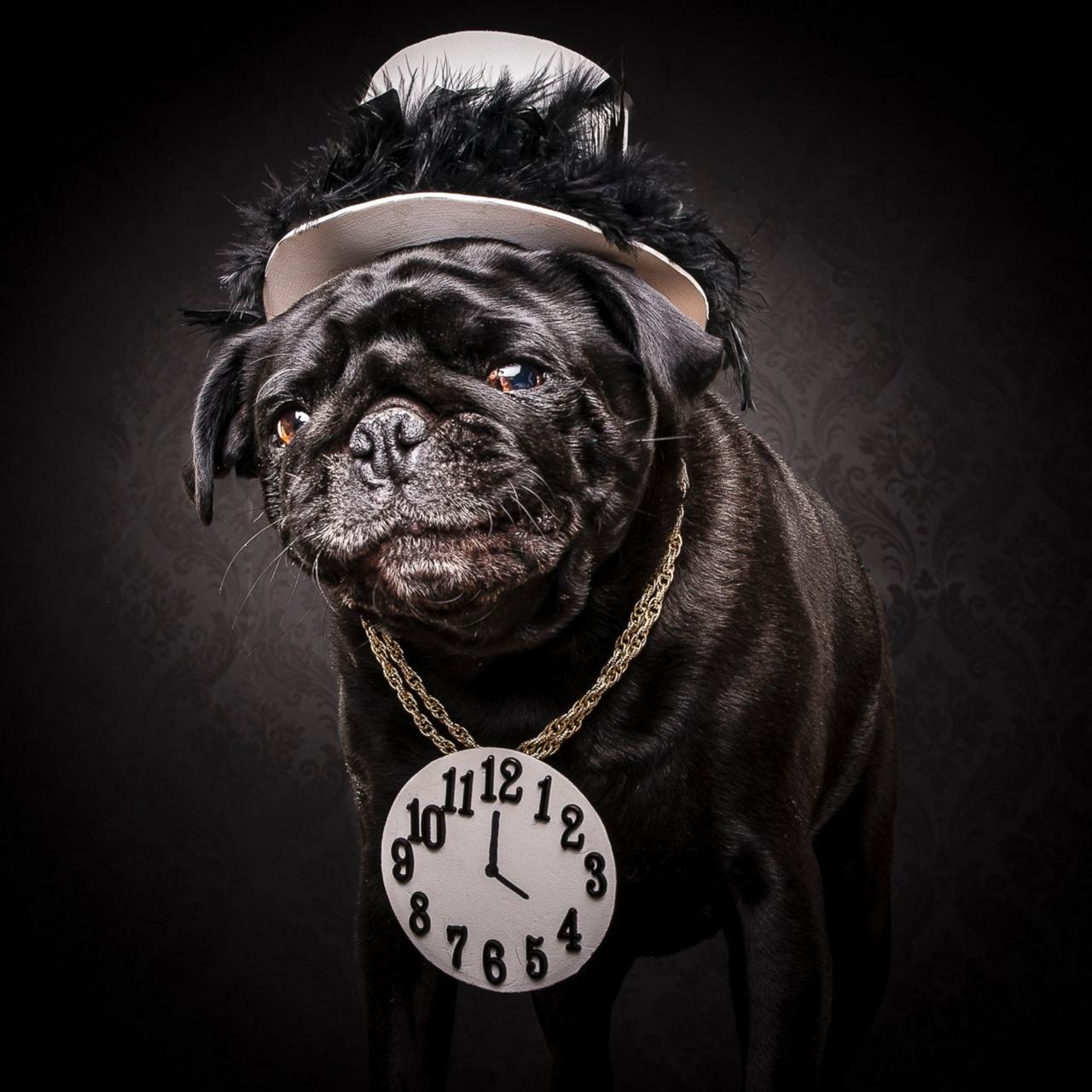 Pugs 09