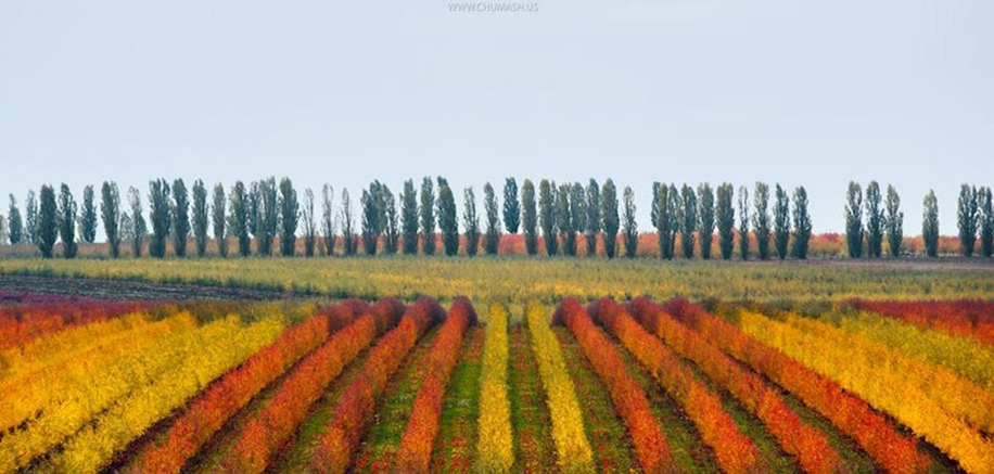 The charm of autumn in the countryside of Moldova 11