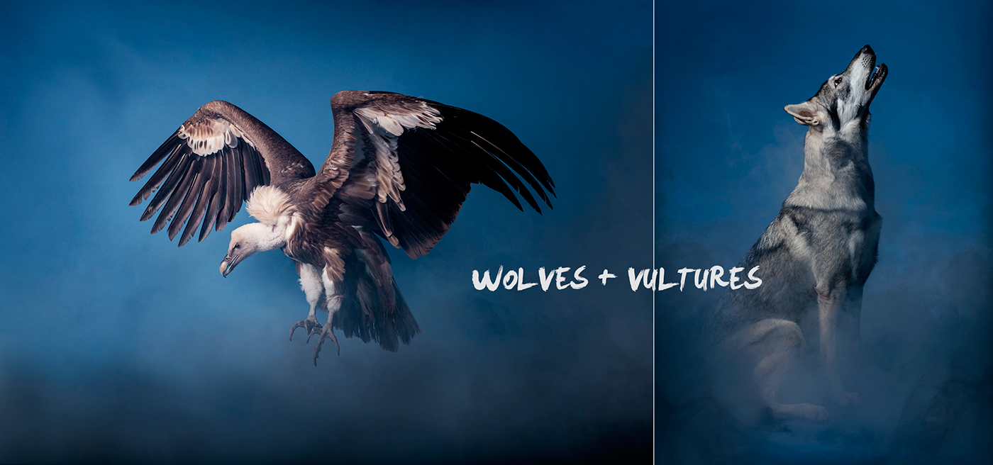 Wolves, vultures and crocodiles in the Studio photo Andrew McGibbon 01