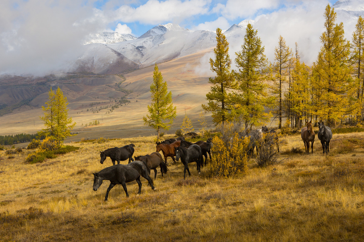 autumn landscapes of Altai 10