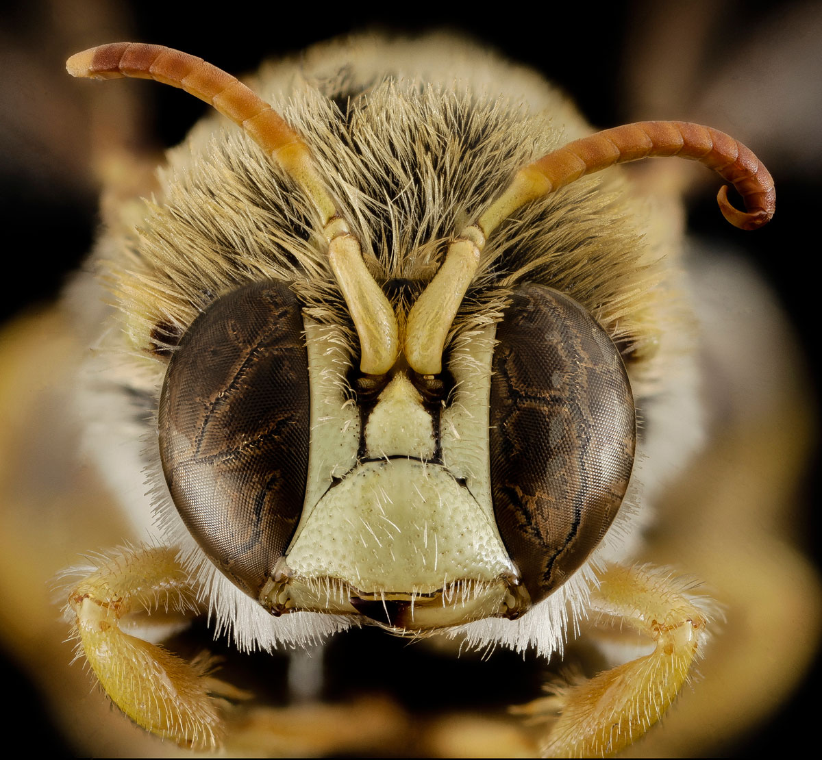 close-ups-of-insect-eyes-by-usgs-biml-10