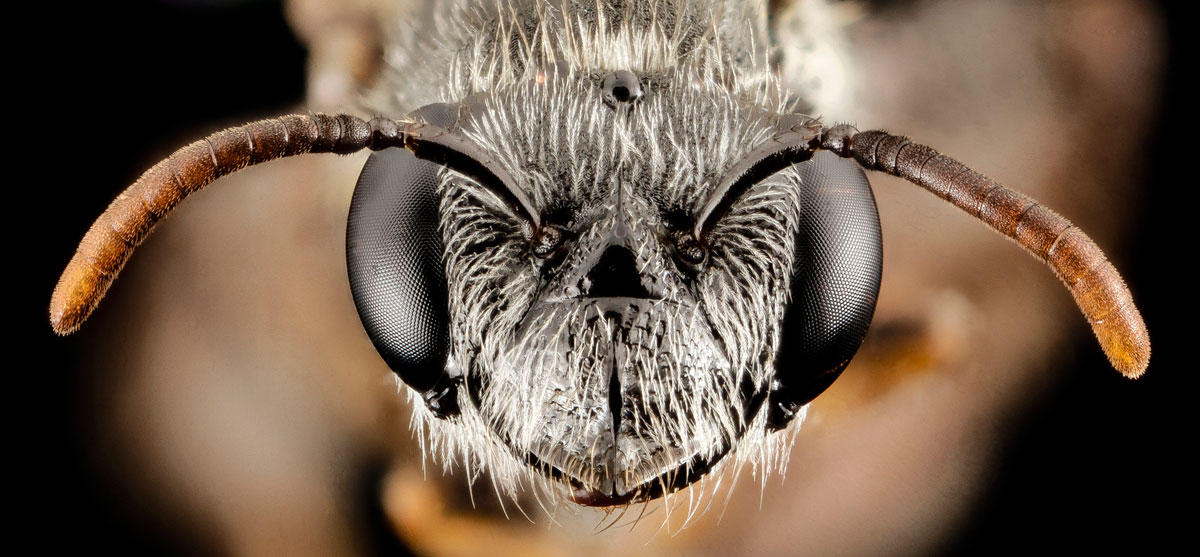 close-ups-of-insect-eyes-by-usgs-biml-11