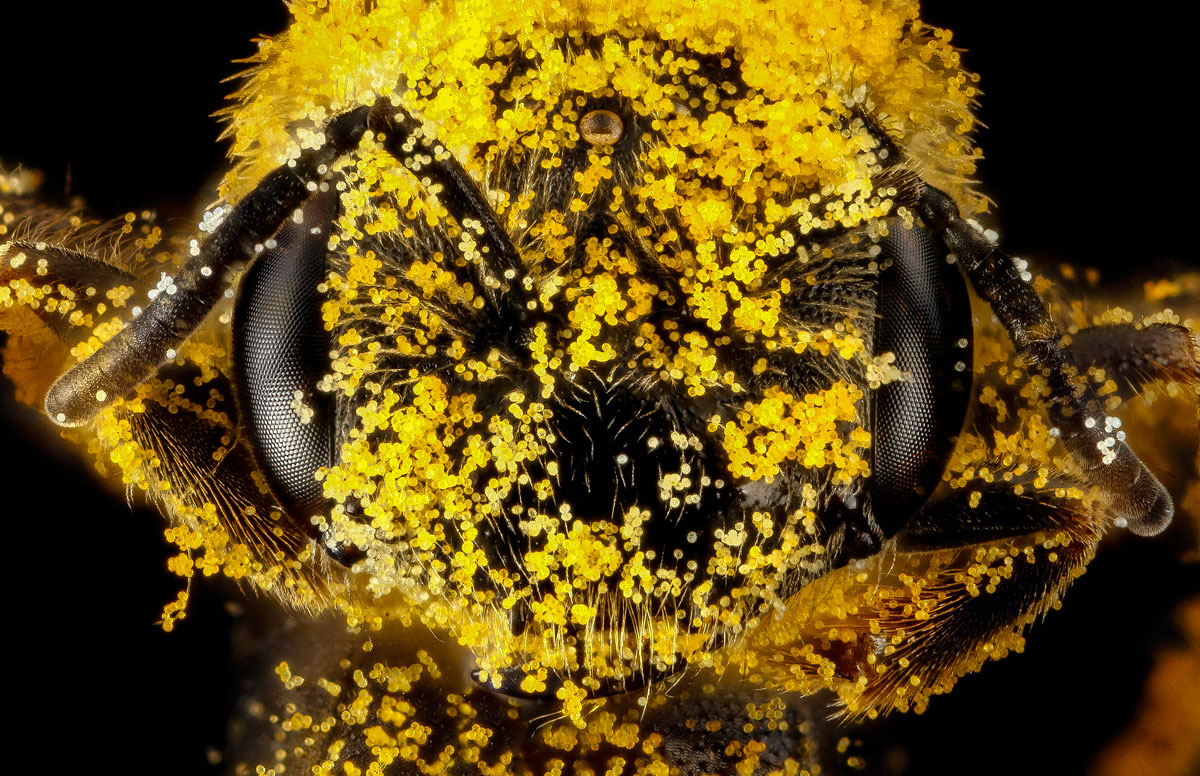 close-ups-of-insect-eyes-by-usgs-biml-12