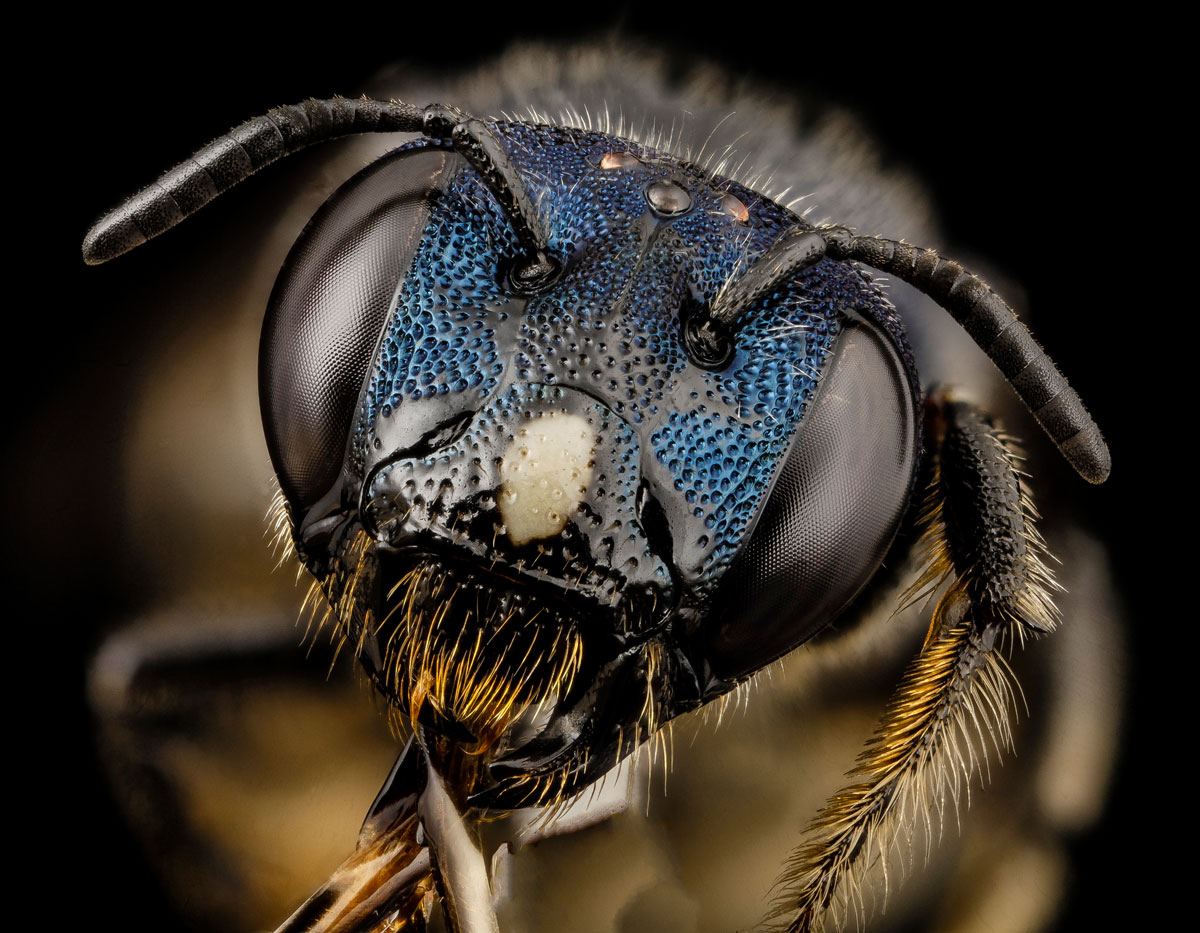 close-ups-of-insect-eyes-by-usgs-biml-14