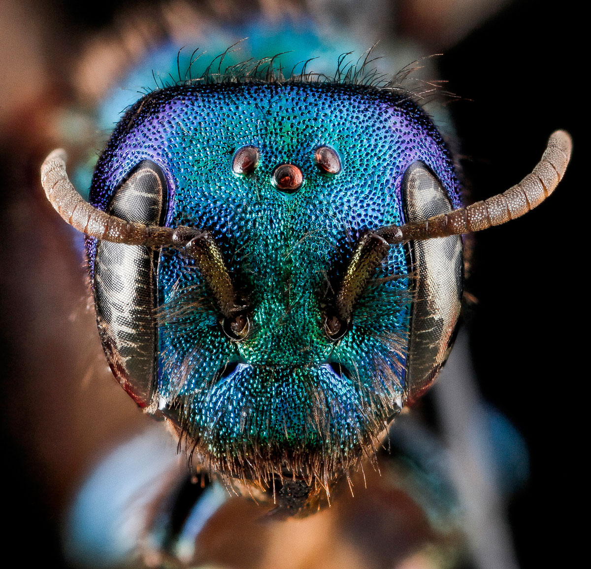close-ups-of-insect-eyes-by-usgs-biml-19
