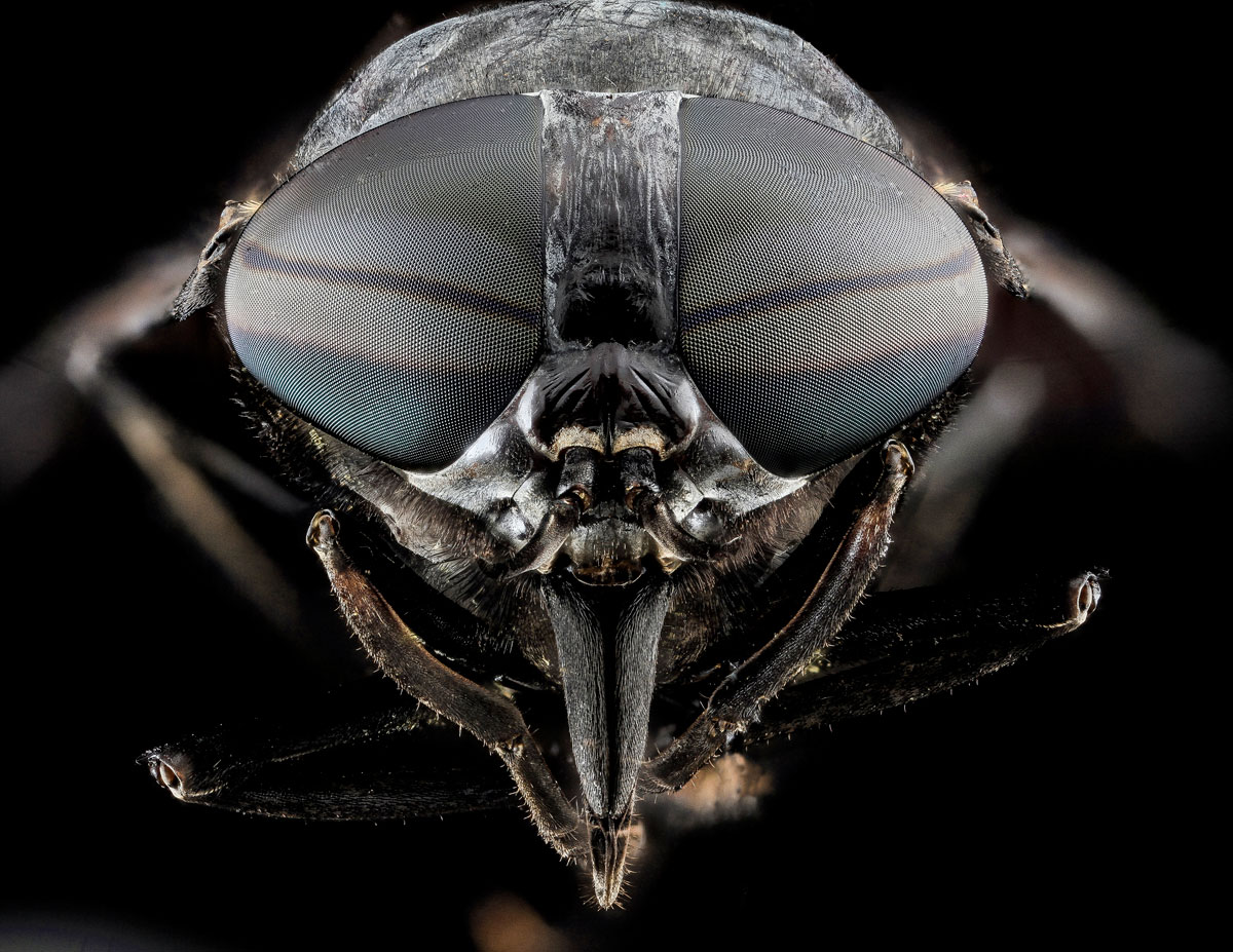 close-ups-of-insect-eyes-by-usgs-biml-2