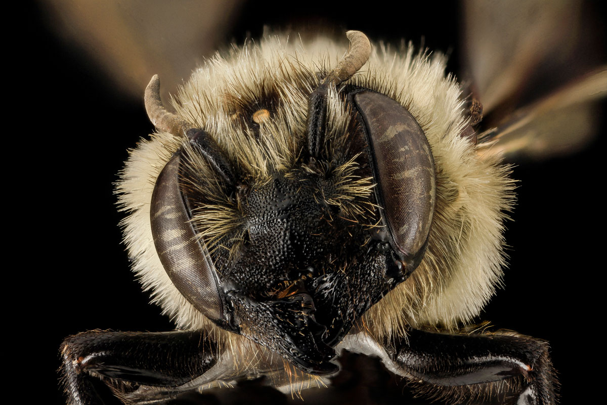 close-ups-of-insect-eyes-by-usgs-biml-22