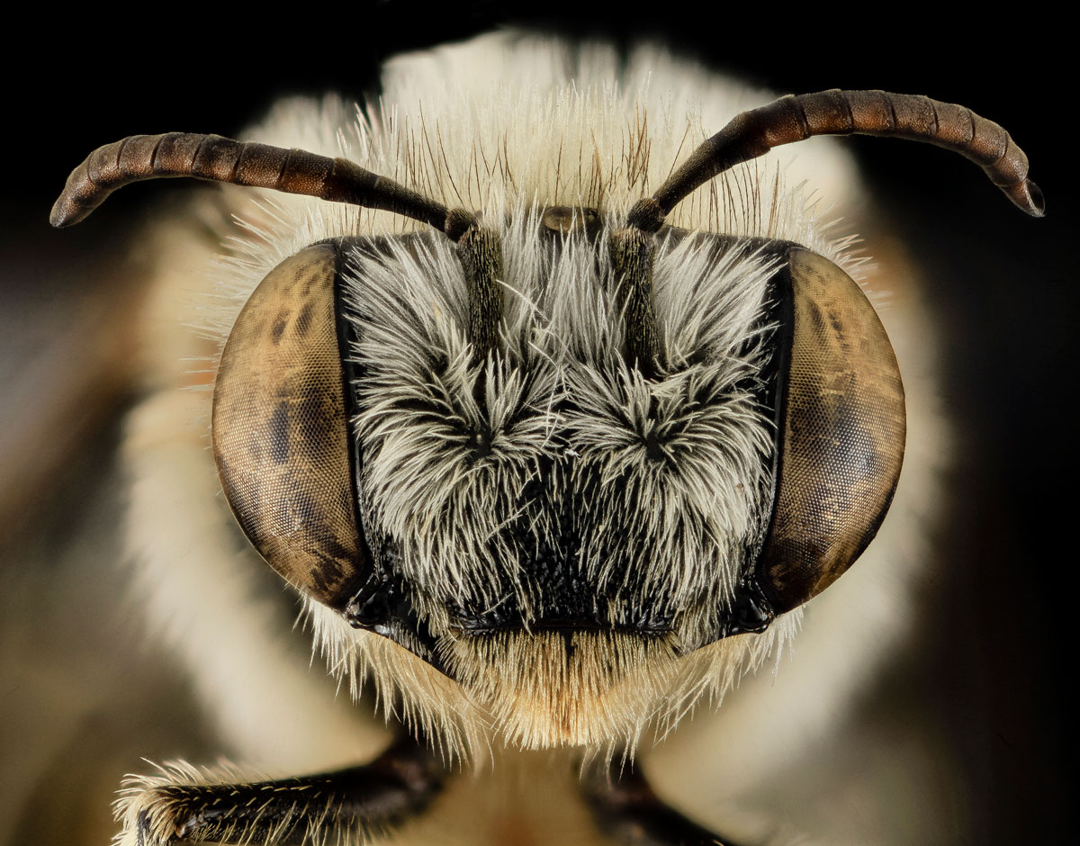 close-ups-of-insect-eyes-by-usgs-biml-23