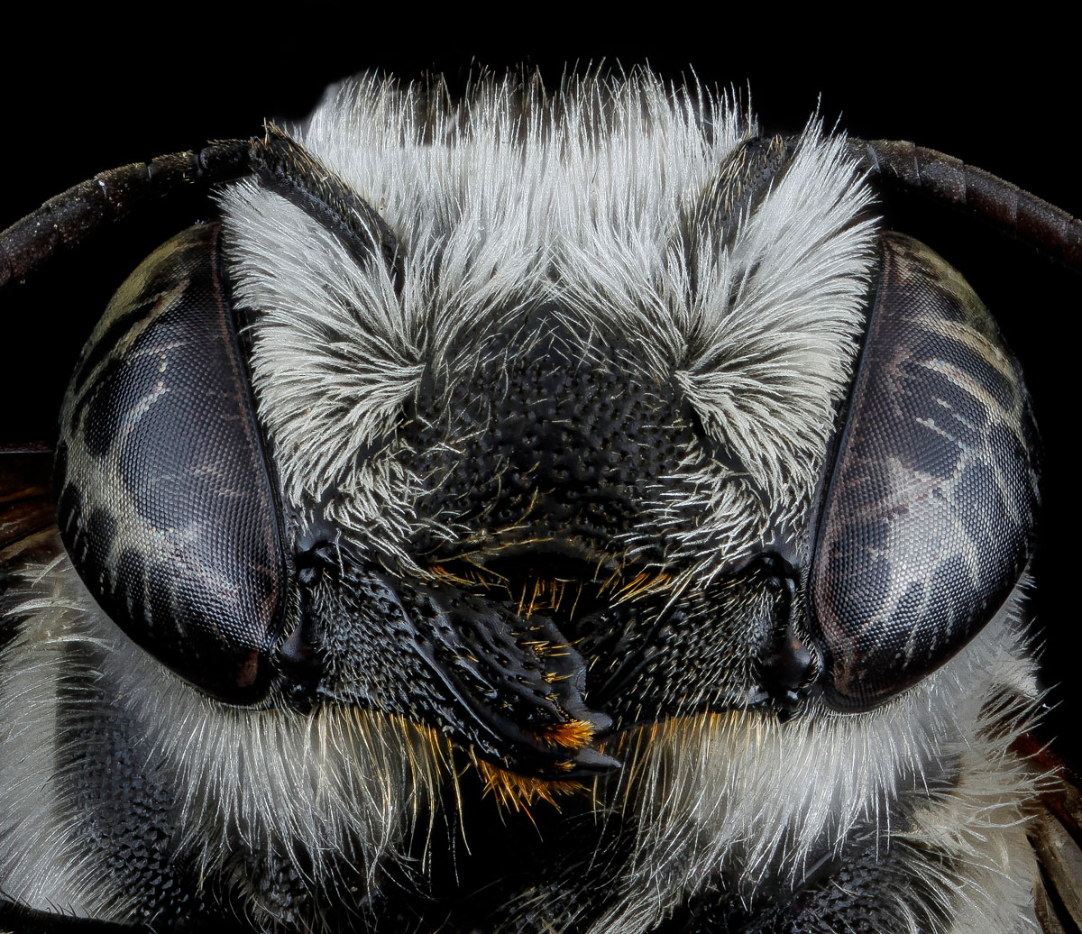 close-ups-of-insect-eyes-by-usgs-biml-25