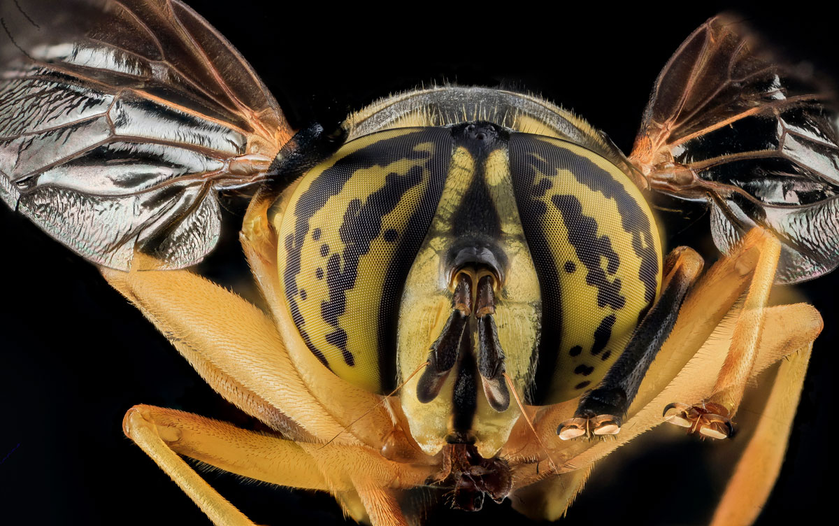 close-ups-of-insect-eyes-by-usgs-biml-3